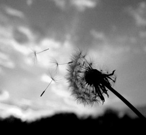 Writing in a Dandelion Future
